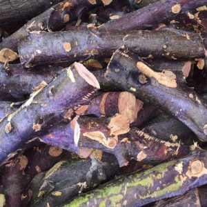 Fruit Wood Logs Apple